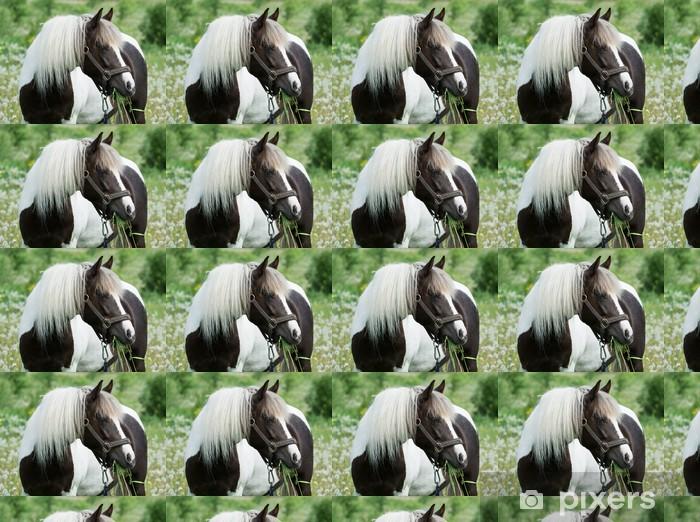 Vinyltapete nach Maß Schönes Pferd grasen auf der Wiese - Säugetiere