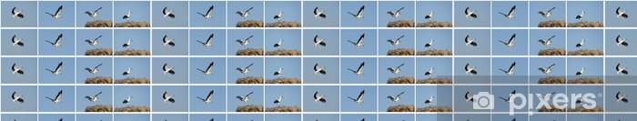 Tapeta na wymiar winylowa Storks - Ptaki