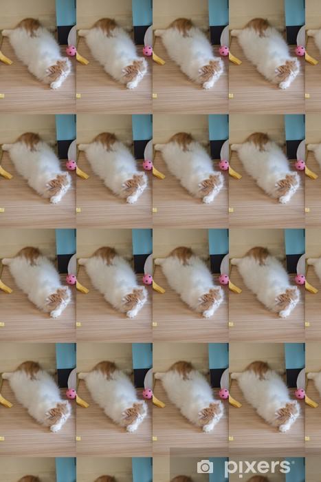 Vinyltapete nach Maß Perserkatzen - Säugetiere