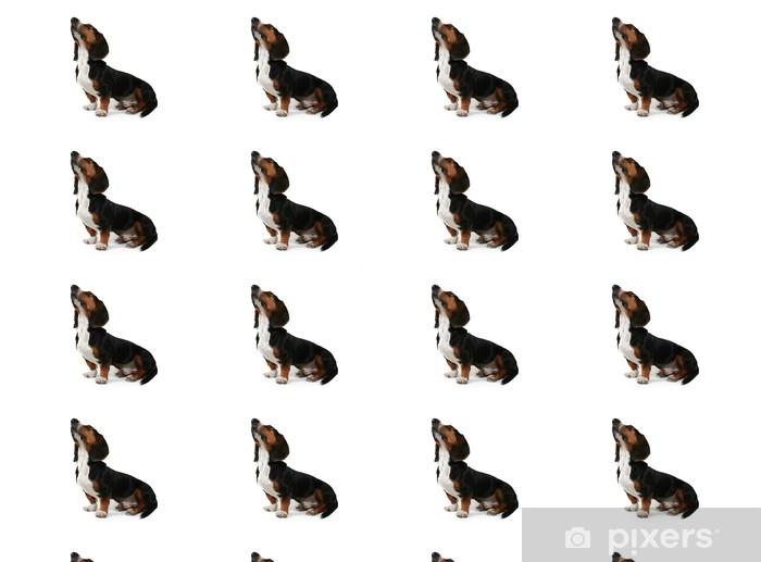 Vinyltapete nach Maß Baby Basset Hound blickte auf weißem - Säugetiere