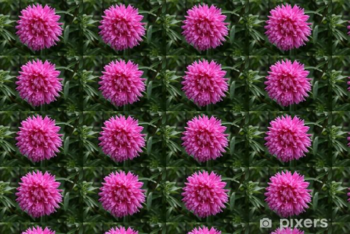 Tapeta na wymiar winylowa Ciemny róż aster - Kwiaty