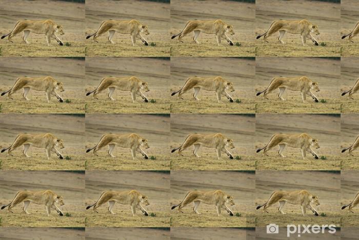Vinyltapete nach Maß Eine geschmeidige junge Löwin jagt über die Ebenen - Säugetiere