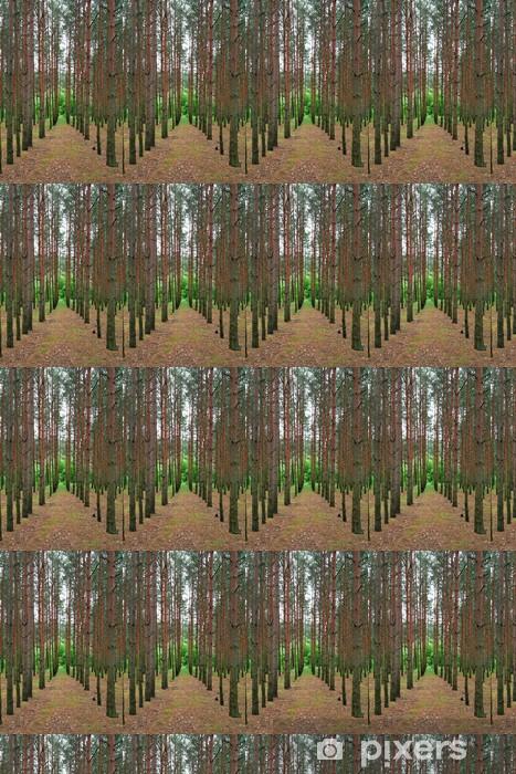 Tapeta Posadzone Sosny Las Drzewo Rytmiczne Wiersze Na Wymiar
