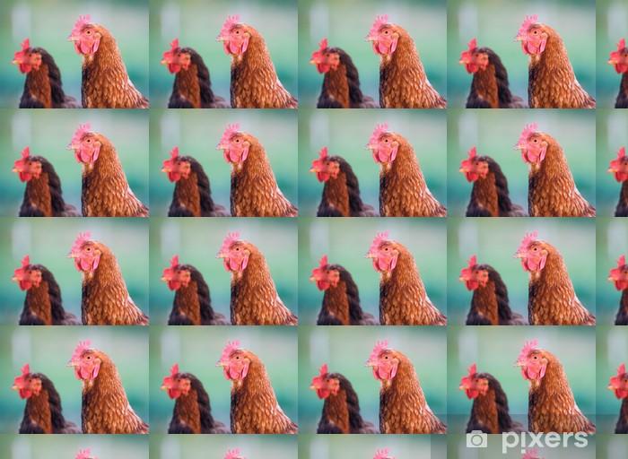 Vinylová tapeta na míru Closup pastviny zvýšil kuřat na farmě na Středozápadě - Ptáci