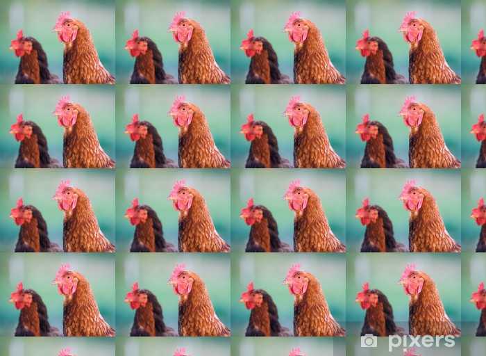 A closup of pasture raised chickens on a farm in the midwest Vinyl custom-made wallpaper - Birds