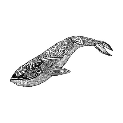 Whale, Vector zentangle print, adult coloring page. Hand drawn artistically , ornamental patterned illustration. Sea Animal collection. Sketch, tattoo, posters, t-shirt design. Wall Decal
