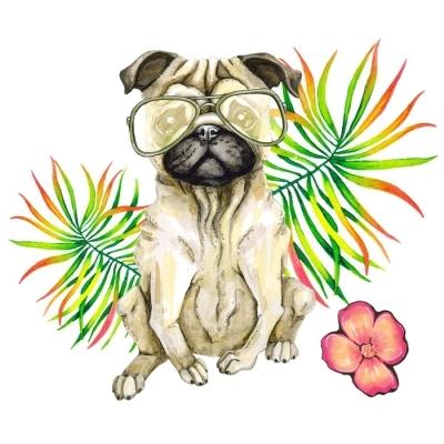 Sticker mural Chien carlin dans les lunettes de soleil, paume et fleurs  isolées sur fond 3bf212e1fc5e