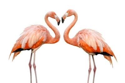 Flamingos wandtattoo pixers wir leben um zu ver ndern - Flamingo wandtattoo ...