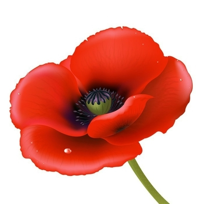 Red Poppy Wall Decal