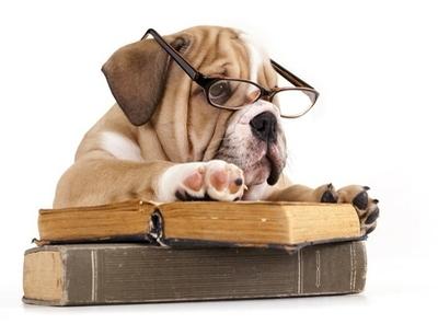 purebred english Bulldog in glasses and book Wall Decal