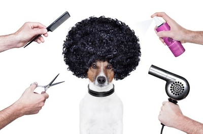 hairdresser scissors comb dog spray Wall Decal