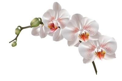 Muursticker Witte orchidee bloemen