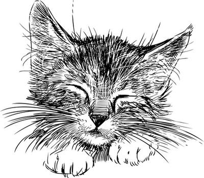 Muursticker Slapende kat