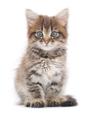 Naklejki Na ścianę Koty Odmień Swoje Wnętrze Pixers