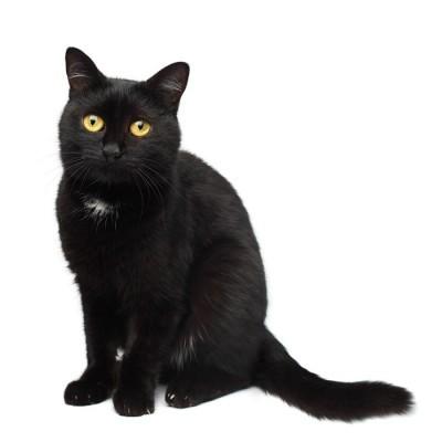 Sort kat Vægklistermærke