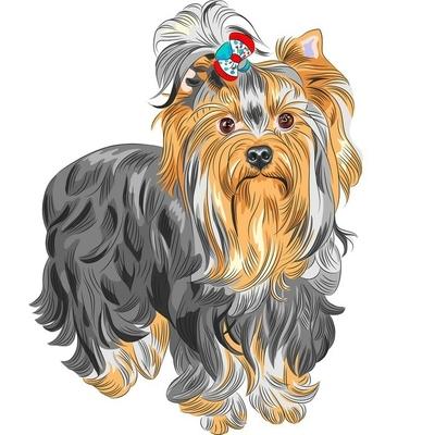 Muursticker Vector schattige hond met stamboom Yorkshire terrier