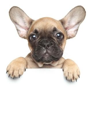 Duvar Çıkartması Beyaz bir afiş üzerine köpek