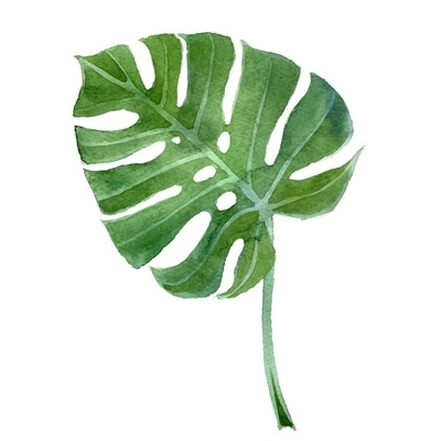 watercolor monstera leaf Wall Decal