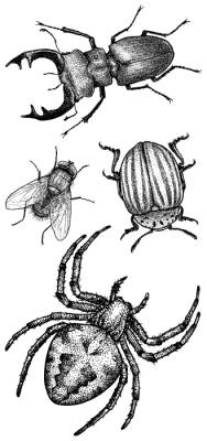 Insects in the forest Sticker set