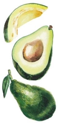 An avocado Sticker set