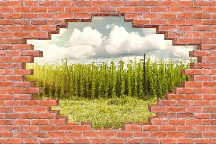 Fototapeta winylowa Dziura w murze - Plantacja - Dziury w ścianie