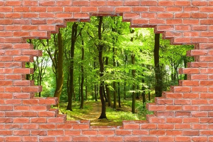 Fototapeta winylowa Dziura w murze - Las bukowy latem - Dziury w ścianie