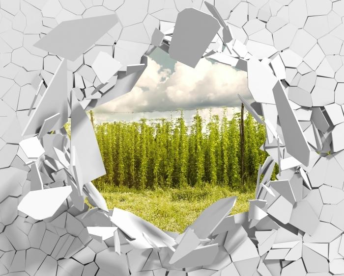 Fototapeta winylowa Dziura w ścianie - Plantacja - Dziury w ścianie