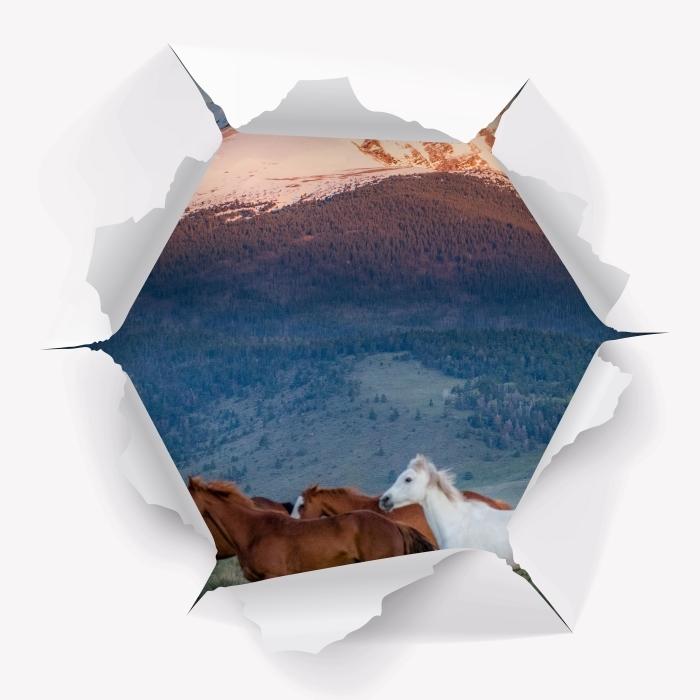 Fototapeta winylowa Dziura w ścianie - Konie - Dziury w ścianie