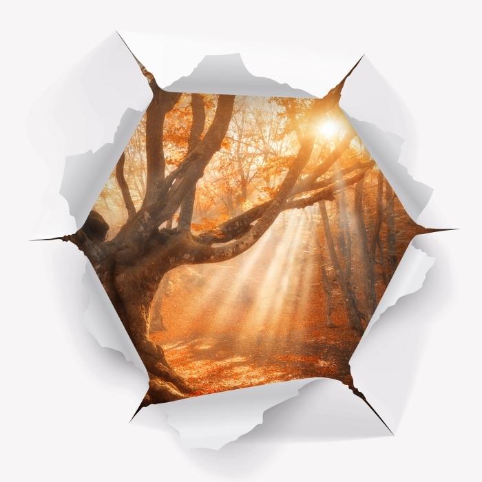 Sticker Pixerstick Trou dans le mur - Les arbres et la lumière du soleil - Les trous dans le mur