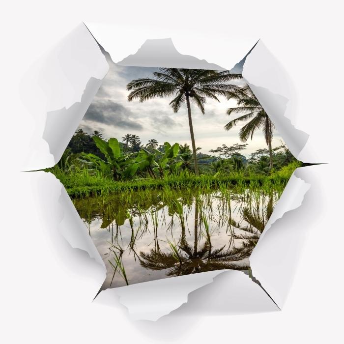 Fototapeta winylowa Dziura w ścianie - Palmy. Indonezja. - Dziury w ścianie