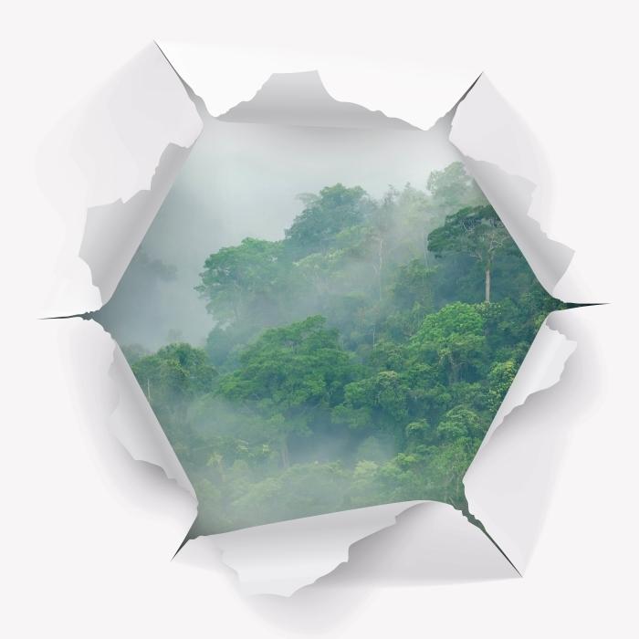 Fototapeta winylowa Dziura w ścianie - Lasy deszczowe - Dziury w ścianie