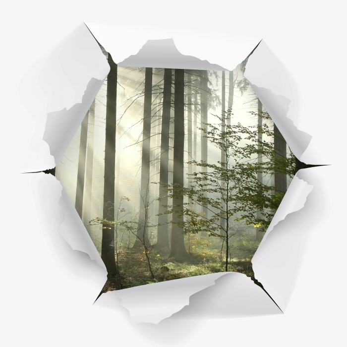 Papier peint vinyle Trou dans le mur - forêt de conifères un jour d'automne brumeux - Les trous dans le mur