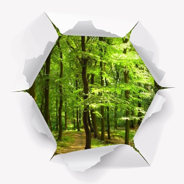 Papier peint vinyle Trou dans le mur - Forêt de hêtres dans l'été - Les trous dans le mur