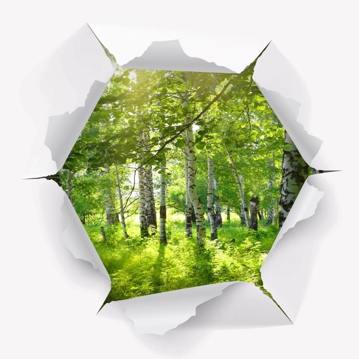 Fototapeta winylowa Dziura w ścianie - Lato. Brzozowe lasy. - Dziury w ścianie