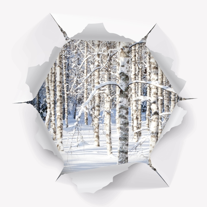 Fototapeta winylowa Dziura w ścianie - Śnieżne brzozy - Dziury w ścianie