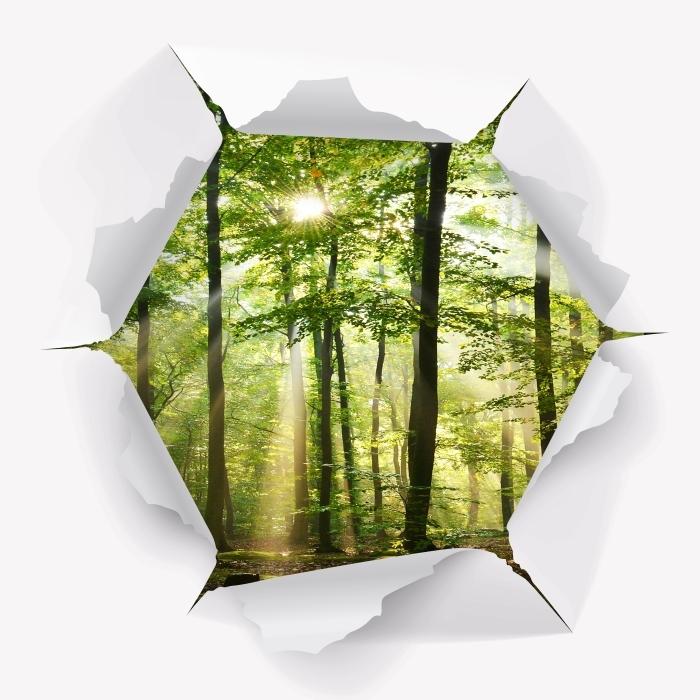 Papier peint vinyle Trou dans le mur - Forêt - Les trous dans le mur