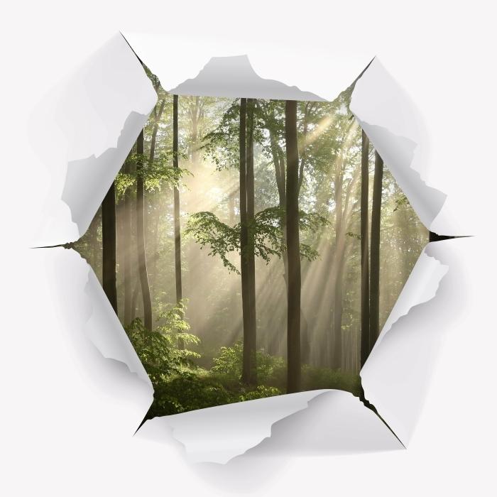 Fototapeta winylowa Dziura w ścianie - Mglisty poranek w lesie - Dziury w ścianie