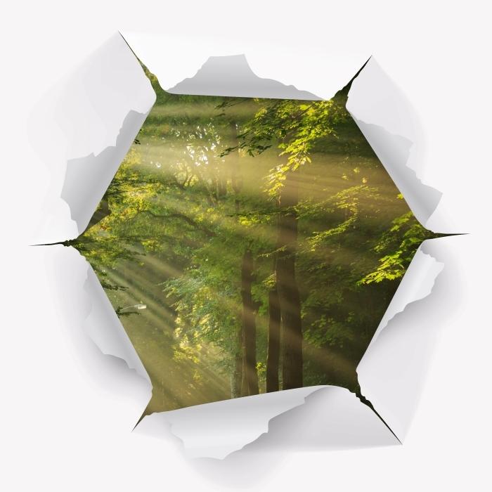 Fototapeta winylowa Dziura w ścianie - Promienie słońca w lesie - Dziury w ścianie
