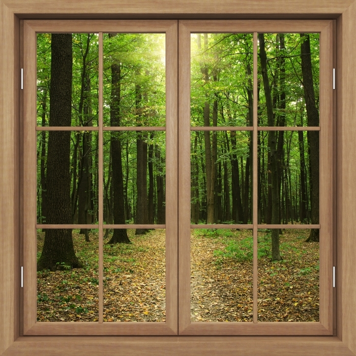 Papier peint vinyle Fenêtre Fermée Brown - Forêt Au Soleil - La vue à travers la fenêtre