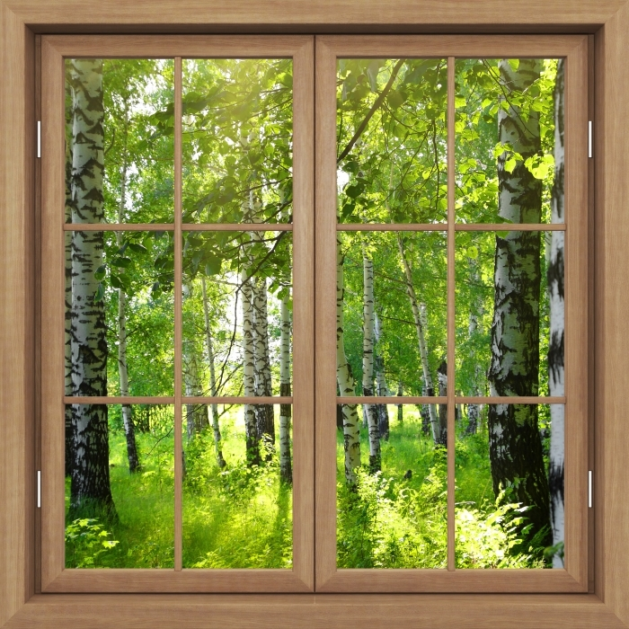 Brown closed the window - summer. Birch forests. Vinyl Wall Mural - View through the window