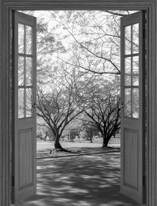 Fototapeta samoprzylepna Brązowe drzwi - Aleja. - Widok przez drzwi