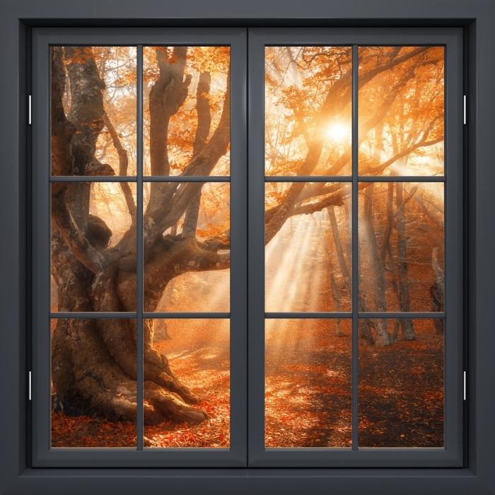 Fototapeta winylowa Okno czarne zamknięte - Drzewa i promienie słoneczne - Widok przez okno