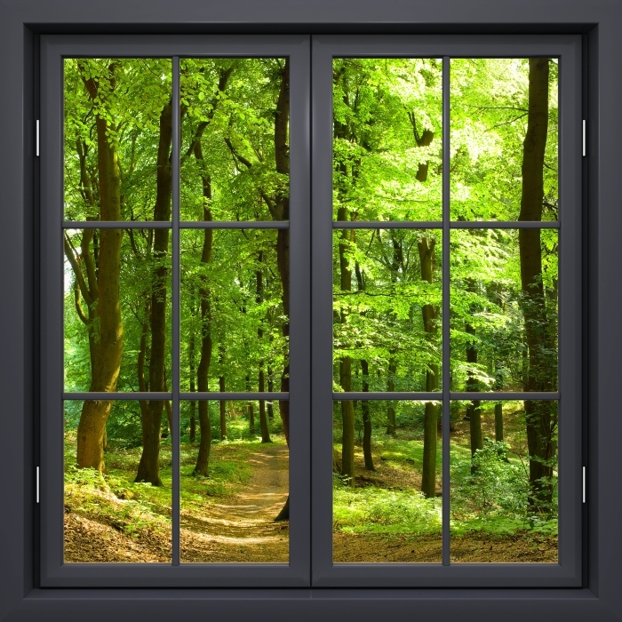 Papier peint vinyle Fenêtre Noire Fermée - Forêt De Hêtres Dans L'Été - La vue à travers la fenêtre