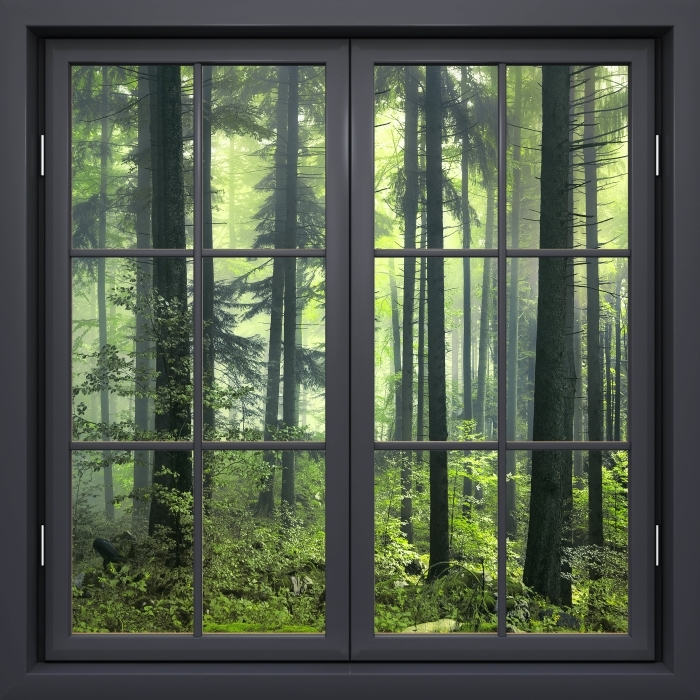 Musta ikkuna kiinni - Mysterious pimeässä metsässä Vinyyli valokuvatapetti - Tarkastele ikkunan läpi