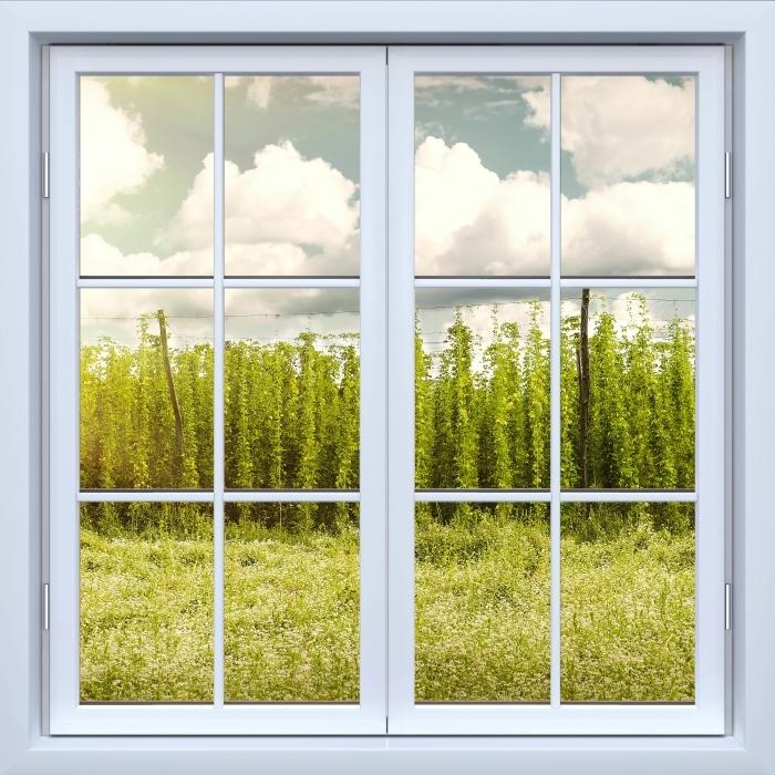Vinyl Fotobehang White closed window - Plantation - Uitzicht door het raam
