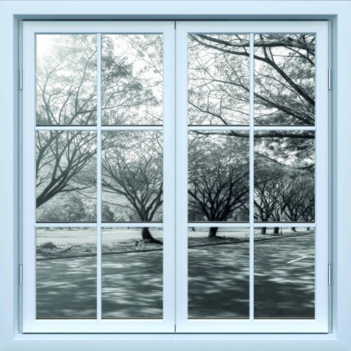 Fototapeta winylowa Okno białe zamknięte - Aleja. - Widok przez okno
