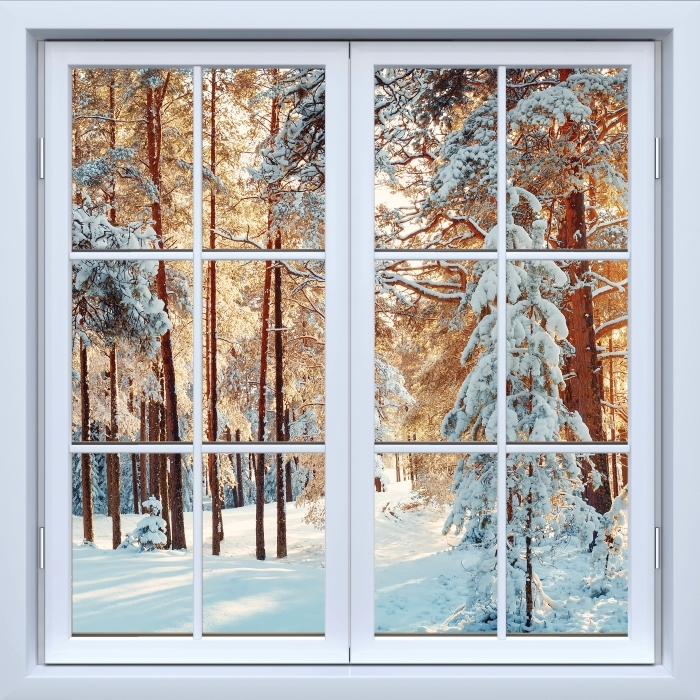 Fototapeta winylowa Okno białe zamknięte - Sosny pokryte śniegiem - Widok przez okno