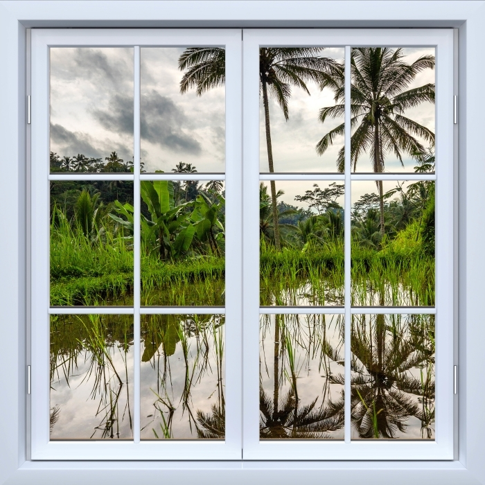Fototapeta winylowa Okno białe zamknięte - Palmy. Indonezja. - Widok przez okno