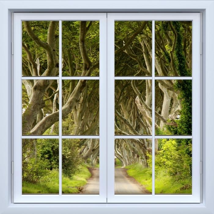 Papier peint vinyle Blanc fenêtre fermée - Allee - La vue à travers la fenêtre