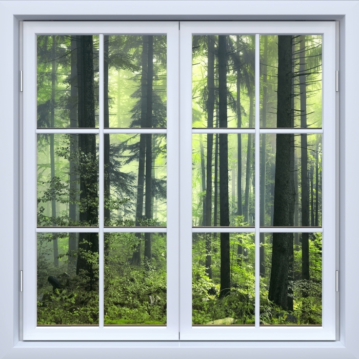 Fototapeta winylowa Okno białe zamknięte - Tajemniczy ciemny las - Widok przez okno